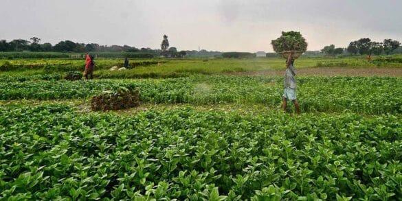 Новые глобальные правила для более справедливого продовольственного будущего